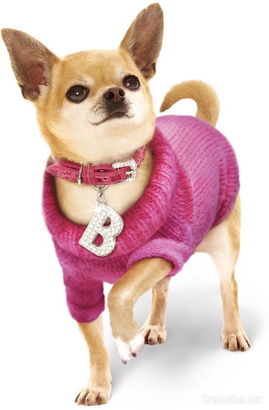 Одежда для щенка чихуахуа